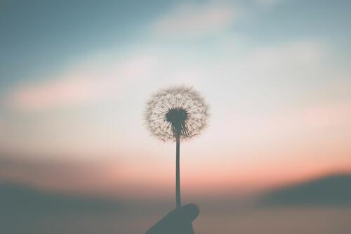 Gratis kurs i mindfulness